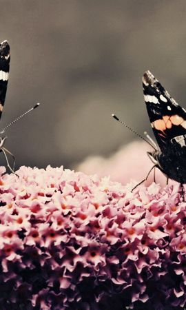54122 Screensavers and Wallpapers Insects for phone. Download Macro, Butterflies, Surface, Flower, Flight, Insects pictures for free