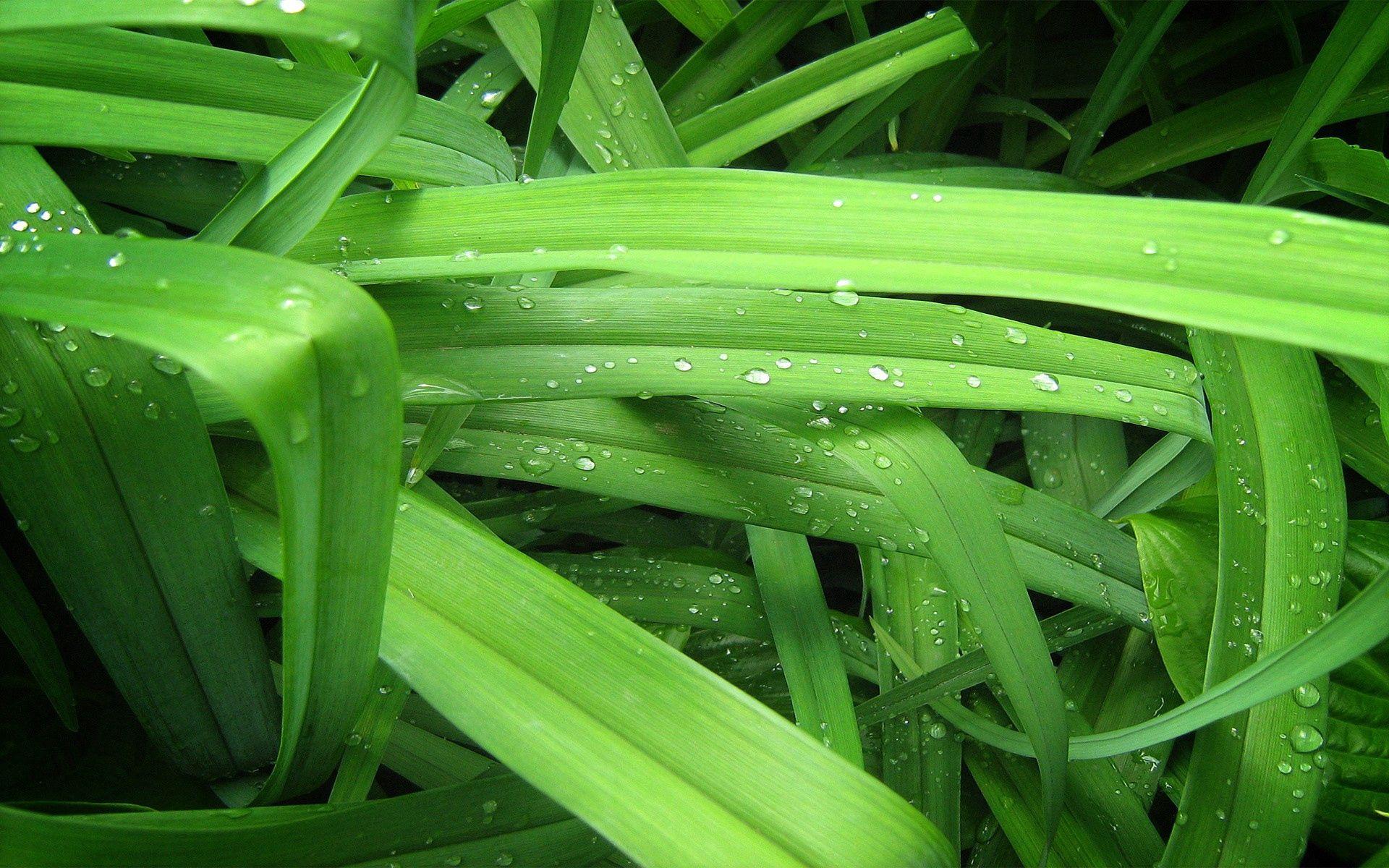 70012 télécharger le fond d'écran Macro, Drops, Herbe, Contexte, Légumes Verts, Verdure - économiseurs d'écran et images gratuitement