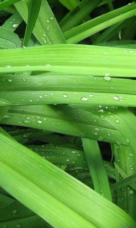 70012 baixar papel de parede Macro, Drops, Grama, Fundo, Verdes, Verdura - protetores de tela e imagens gratuitamente