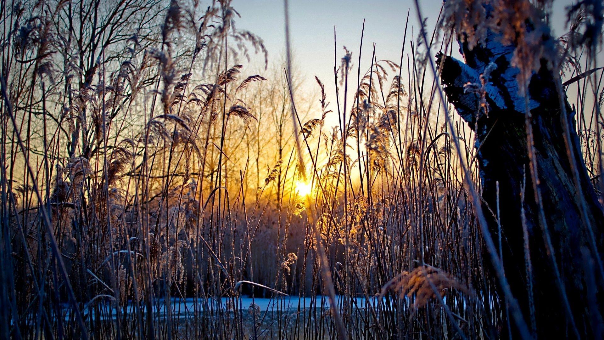 131983 скачать обои Природа, Вечер, Трава, Растительность, Закат, Холод, Солнце - заставки и картинки бесплатно