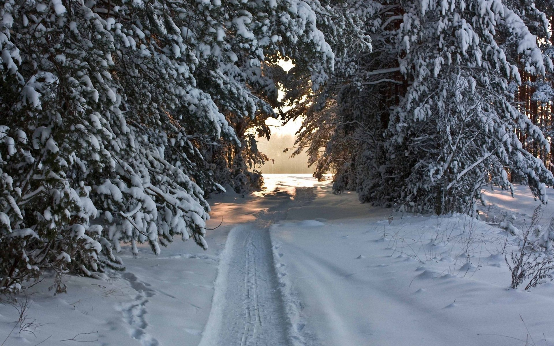 82092 Screensavers and Wallpapers Path for phone. Download Winter, Nature, Trees, Snow, Path, Snow Covered, Trail, Snowy, Ski, Piste, Robe, Garb pictures for free
