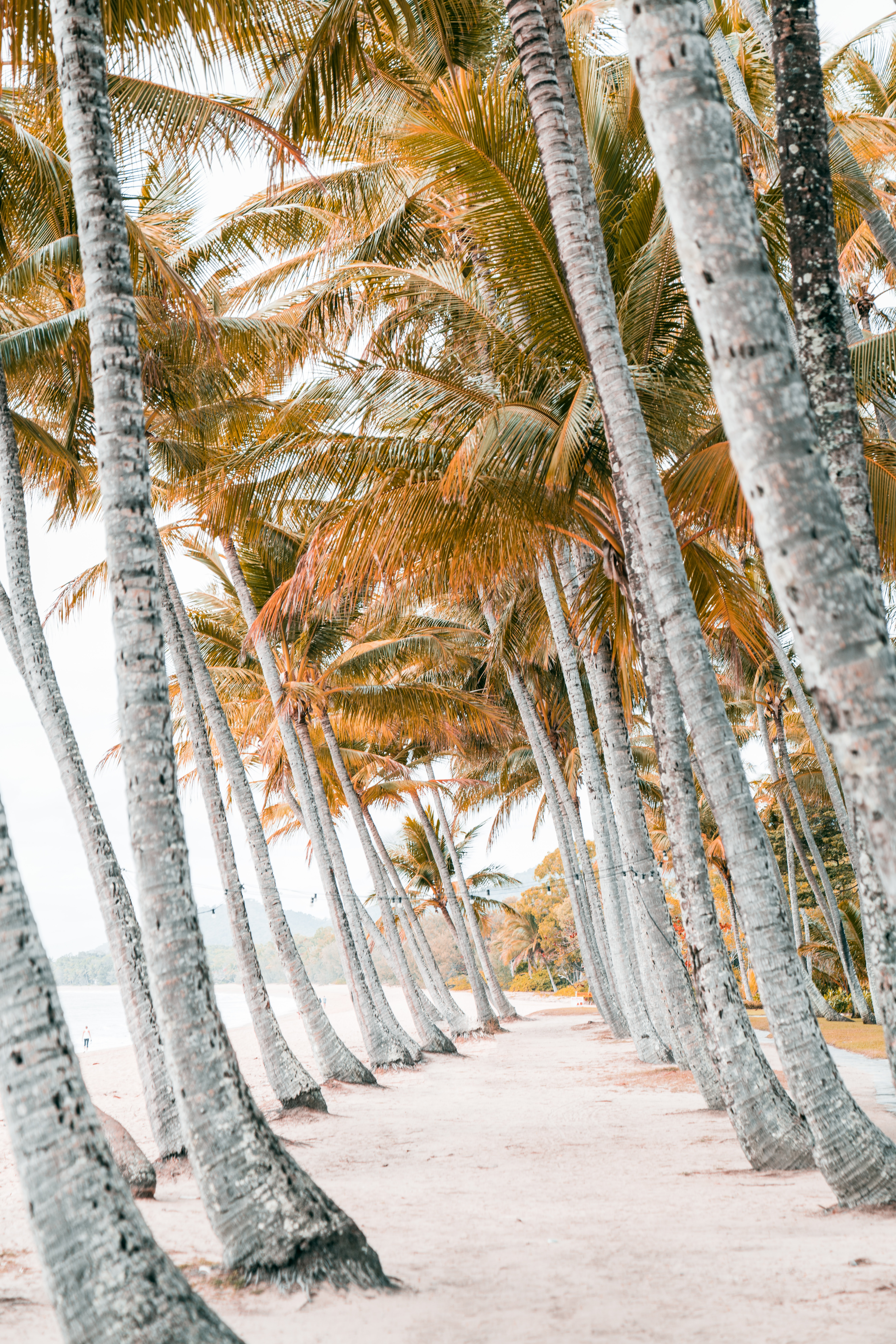 56085 download wallpaper Nature, Beach, Tropics, Trees, Sand, Palms screensavers and pictures for free