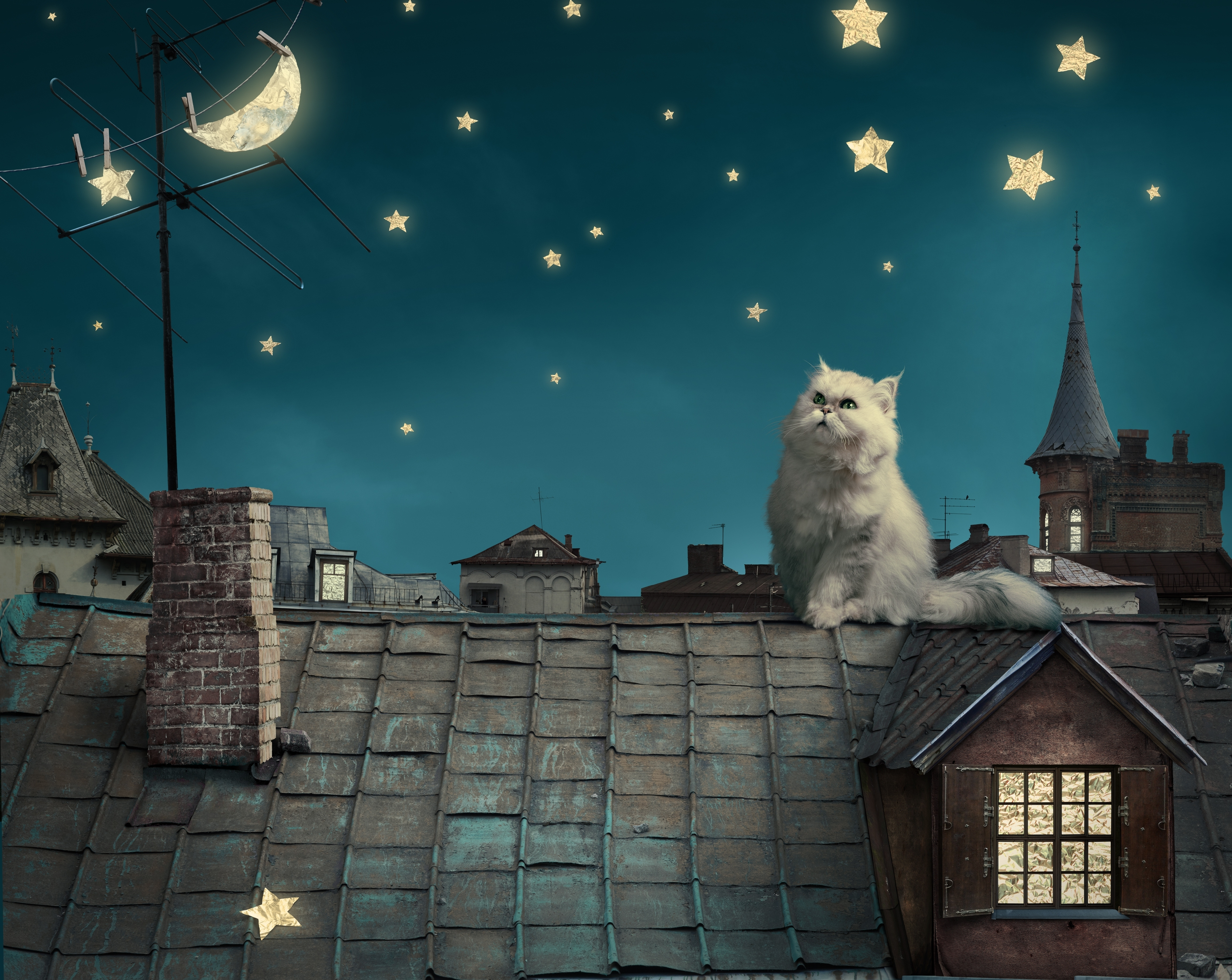 74496 Screensavers and Wallpapers Kitten for phone. Download Animals, Houses, Fantasy, Sky, Stars, Night, Moon, Fairy Tale, Kitty, Kitten, Roof, Roofs, Story, Persian White Cat pictures for free
