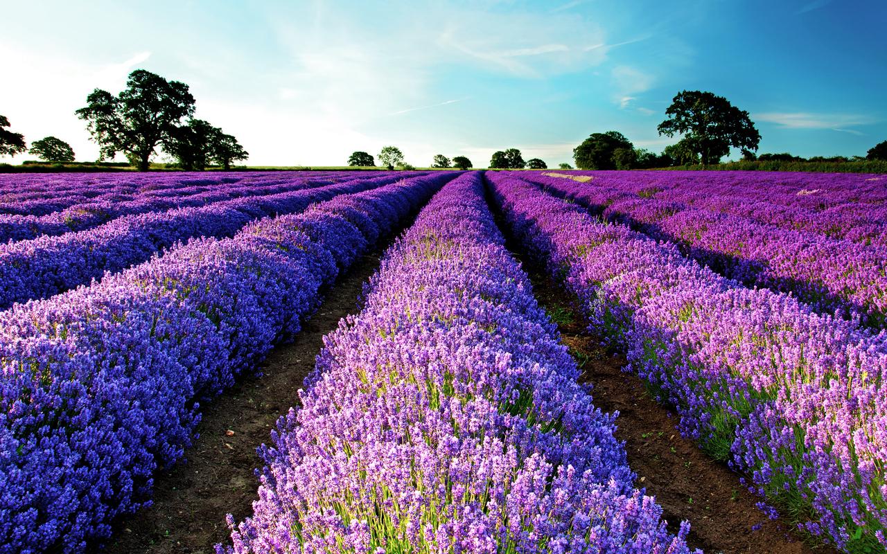 19005 завантажити шпалери Квіти, Рослини, Пейзаж, Поля - заставки і картинки безкоштовно