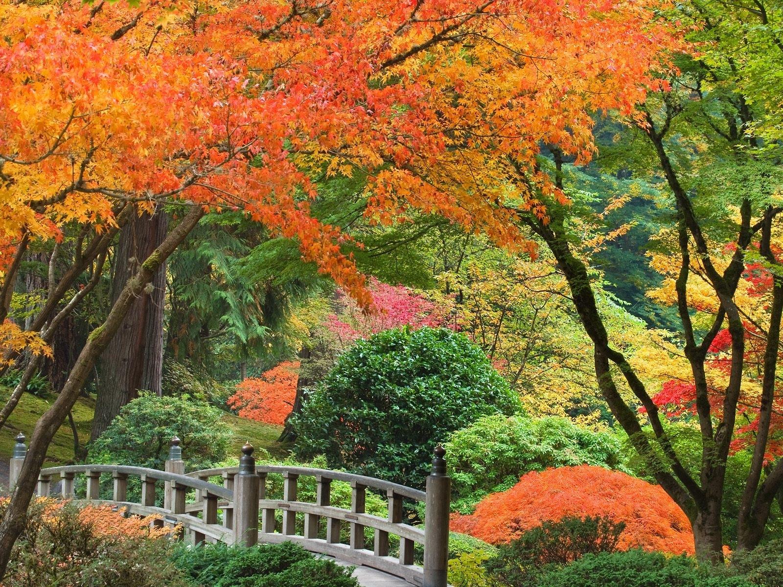 3669 скачать обои Пейзаж, Деревья, Осень, Парки - заставки и картинки бесплатно