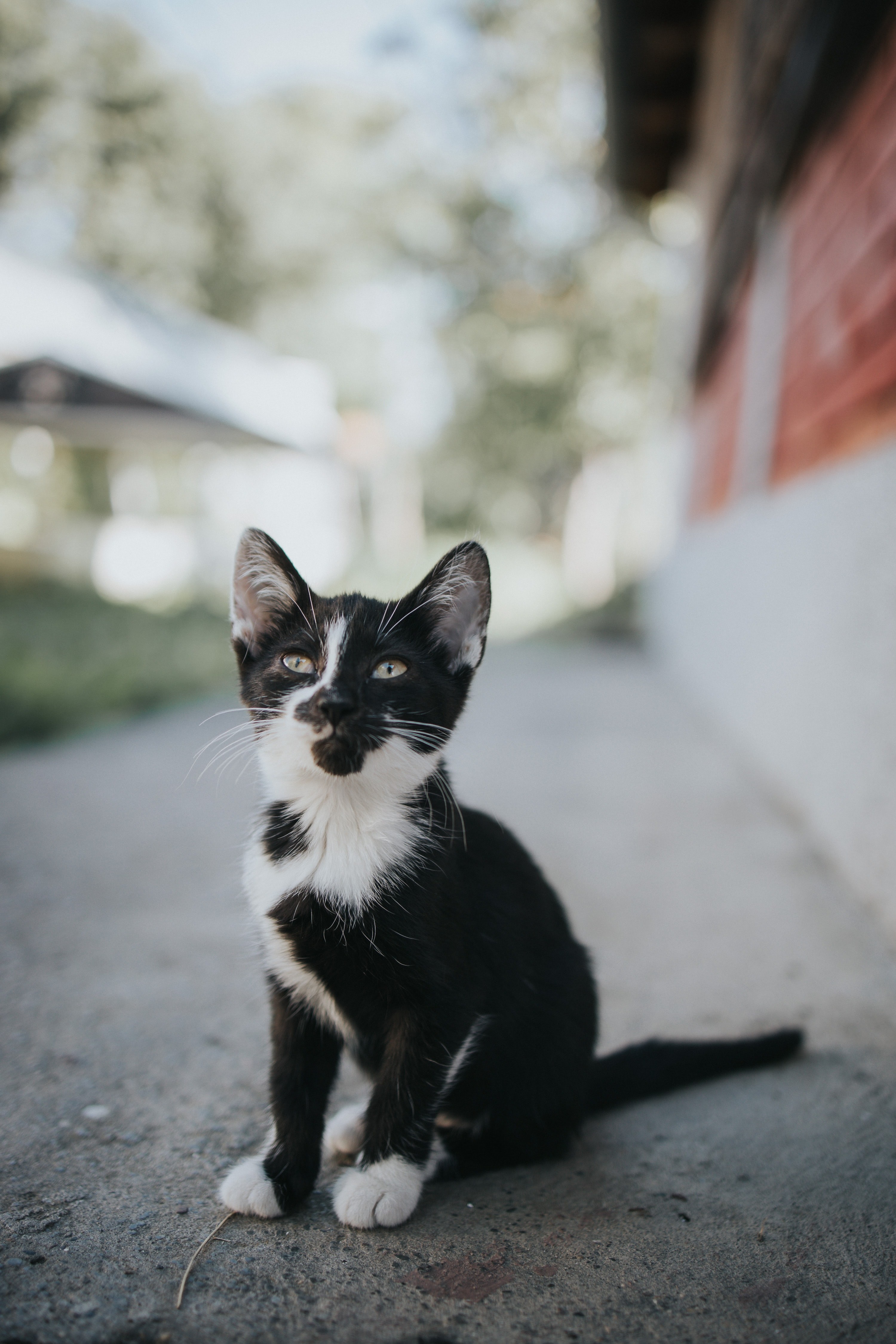 132912 download wallpaper Animals, Kitty, Kitten, Pet, Sight, Opinion, Nice, Sweetheart screensavers and pictures for free