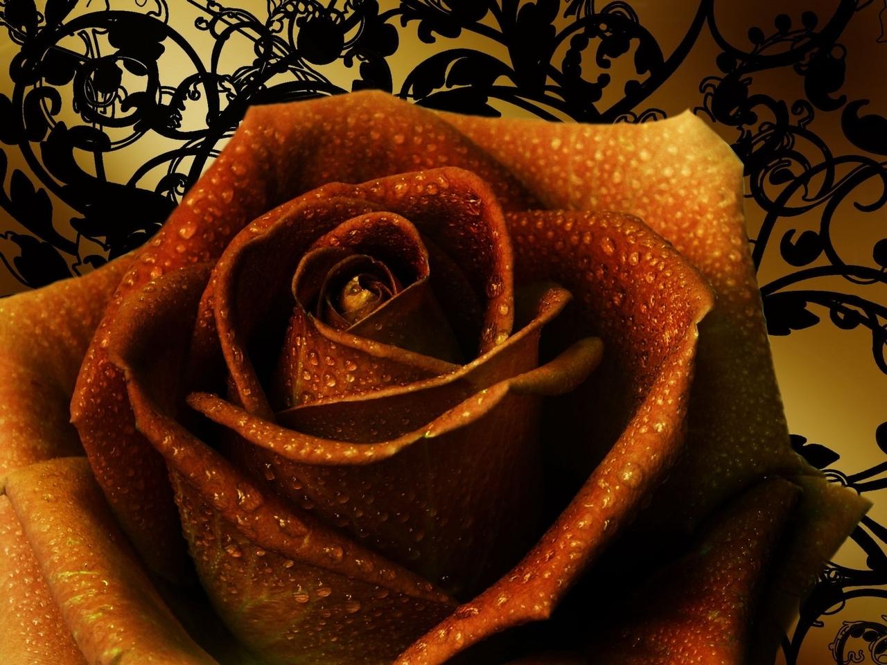 582 скачать обои Праздники, Растения, Цветы, Розы - заставки и картинки бесплатно
