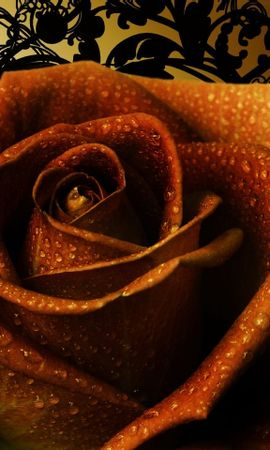 582 download wallpaper Holidays, Plants, Flowers, Roses screensavers and pictures for free