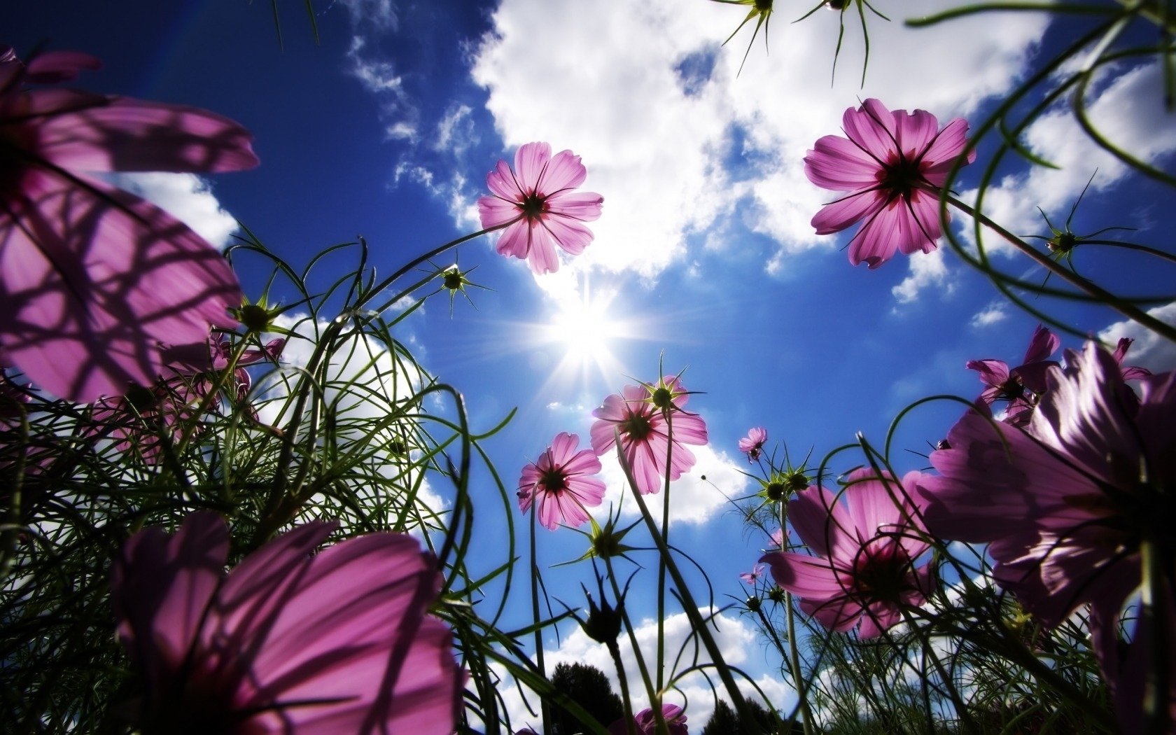 903 download wallpaper Plants, Flowers, Sky, Sun screensavers and pictures for free