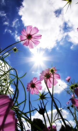 903 télécharger le fond d'écran Plantes, Fleurs, Sky, Sun - économiseurs d'écran et images gratuitement