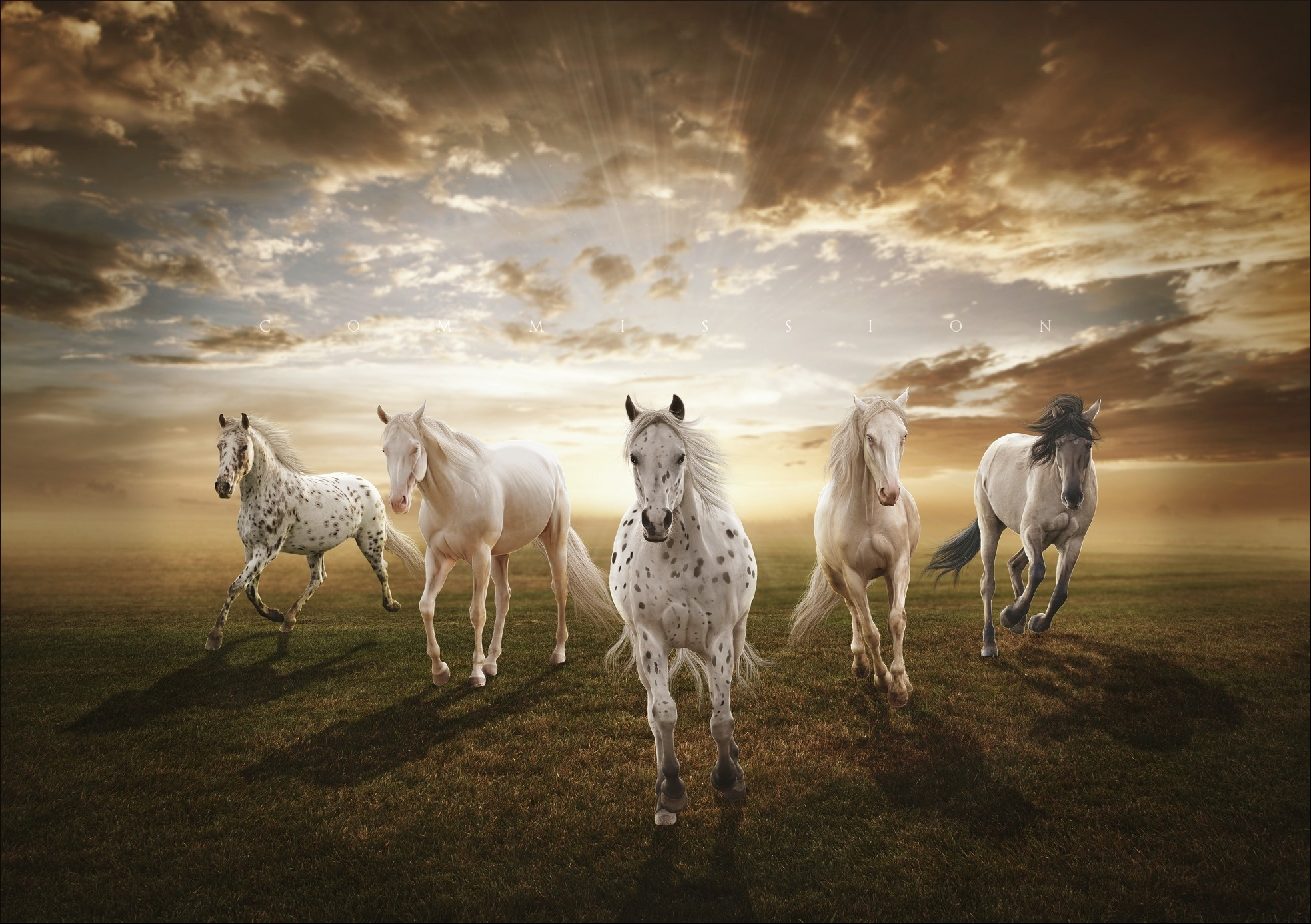 153920 download wallpaper Animals, Sunset, Field, Horses screensavers and pictures for free