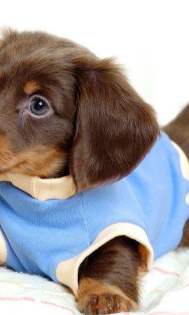 39737 baixar papel de parede Animais, Cães - protetores de tela e imagens gratuitamente