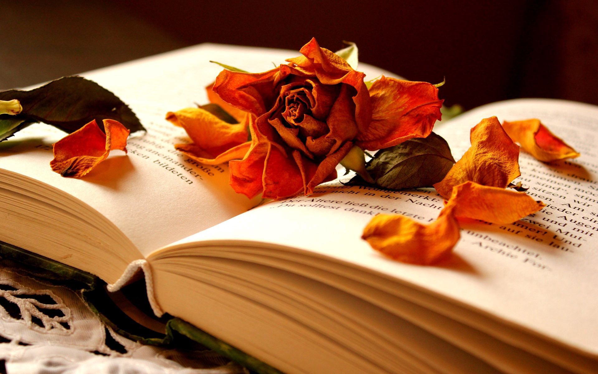 111751 Screensavers and Wallpapers Book for phone. Download Flower, Miscellanea, Miscellaneous, Rose Flower, Rose, Petals, Dry, Book pictures for free