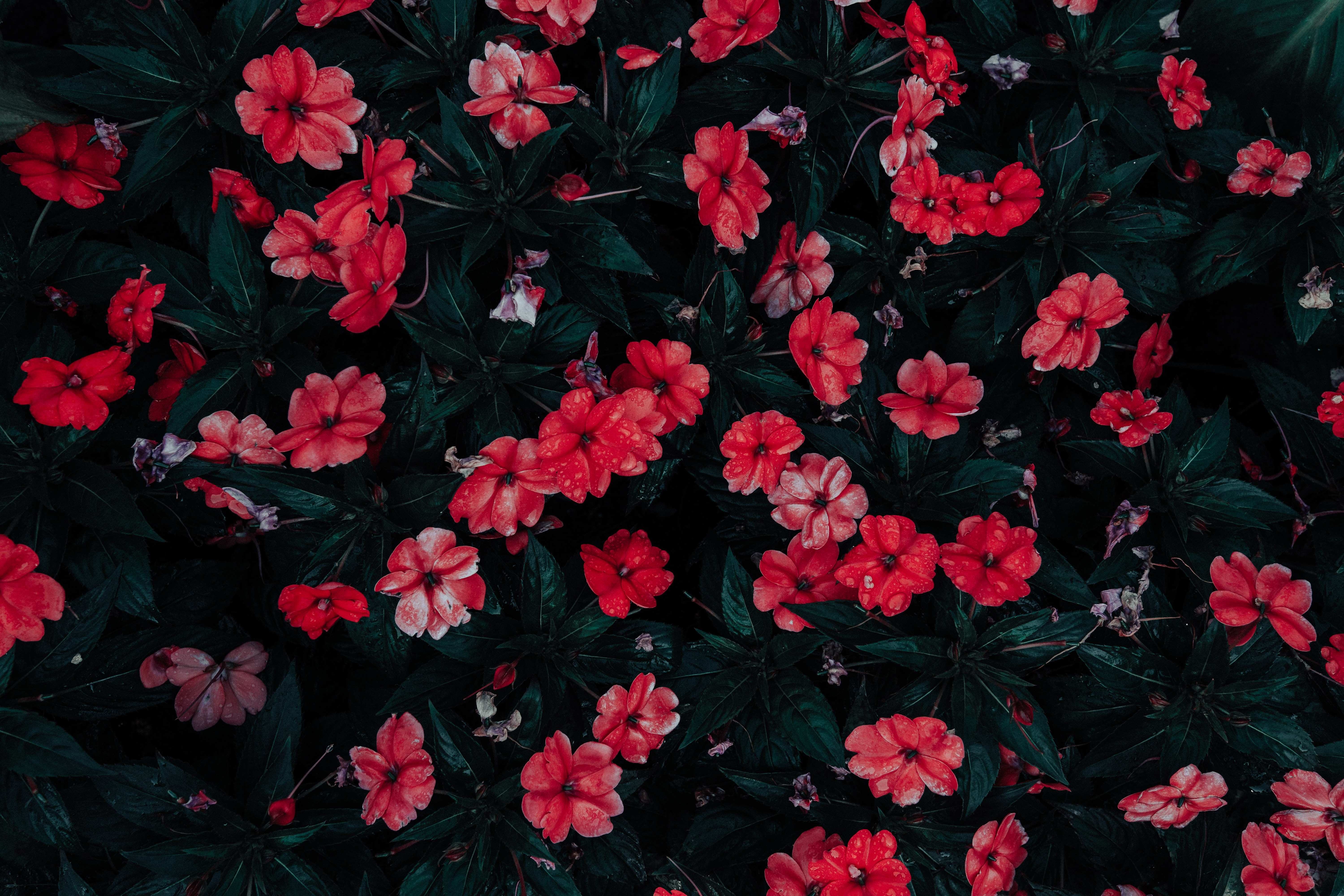 107863 Screensavers and Wallpapers Flower Bed for phone. Download Flowers, Drops, Bloom, Flowering, Flower Bed, Flowerbed pictures for free