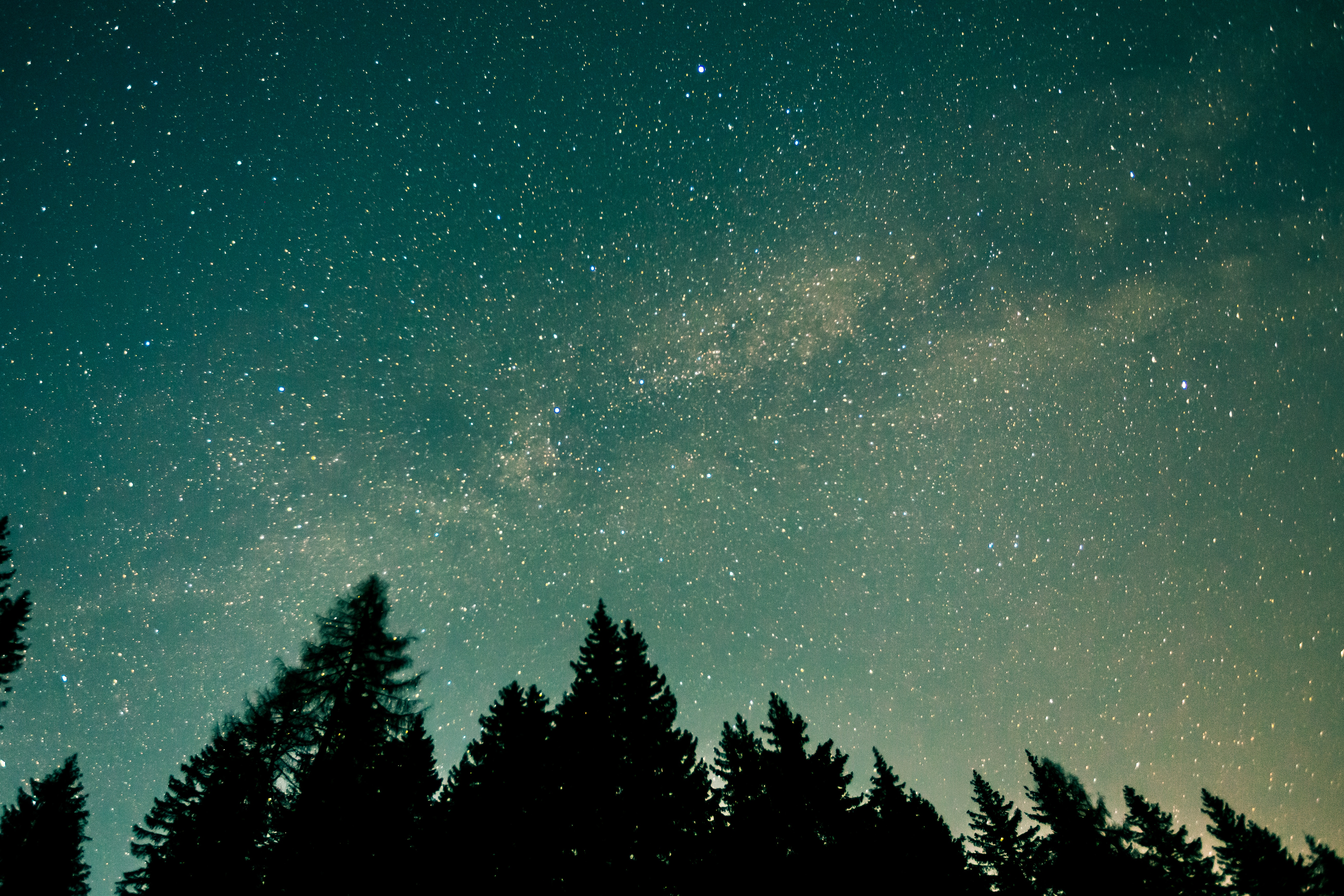 135759 Screensavers and Wallpapers Stars for phone. Download Stars, Nature, Trees, Starry Sky, Space pictures for free