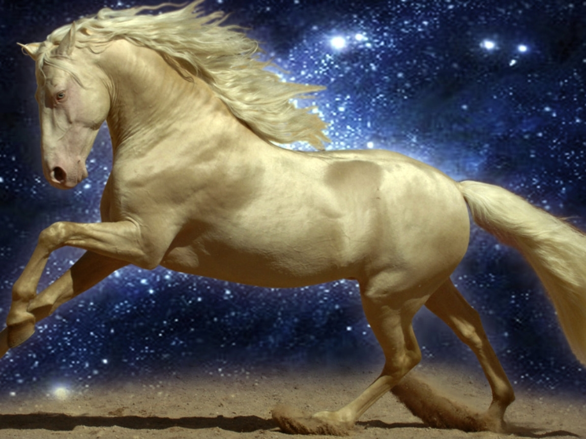 7496 download wallpaper Animals, Horses screensavers and pictures for free