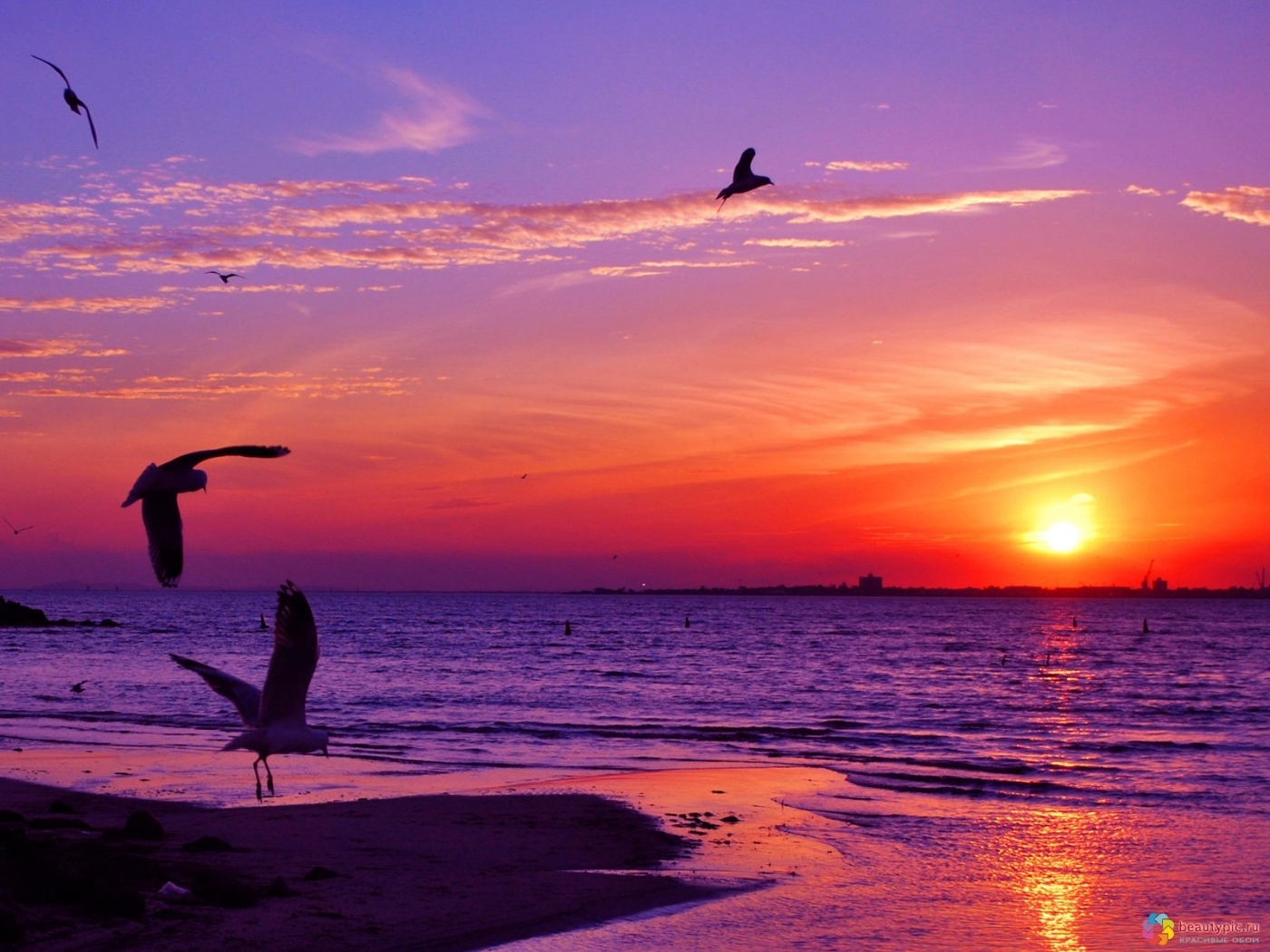 28380 download wallpaper Landscape, Sunset, Sea, Seagulls screensavers and pictures for free