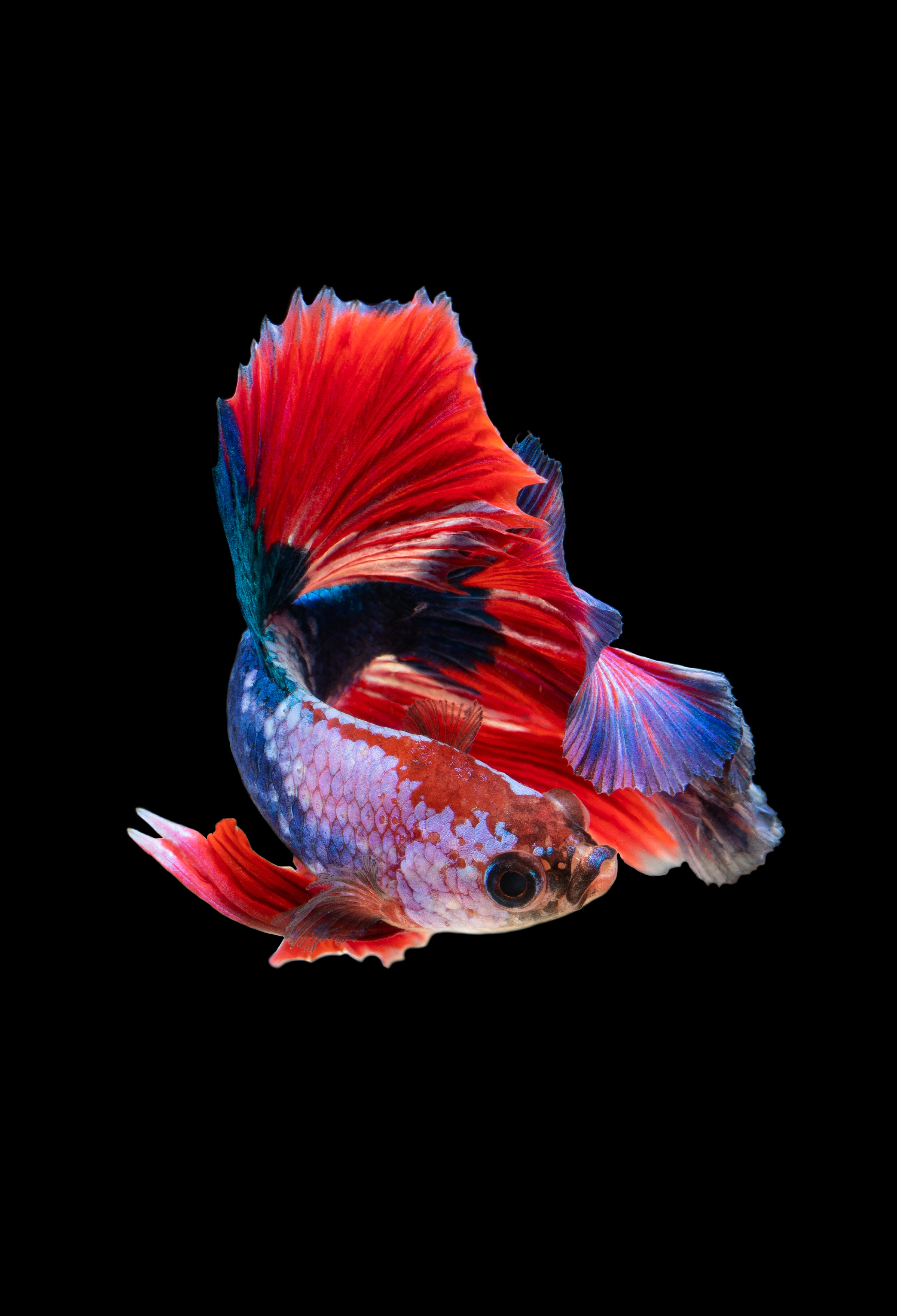 124945 Screensavers and Wallpapers Aquarium for phone. Download Animals, Dark Background, Aquarium, Small Fish, Fishy pictures for free