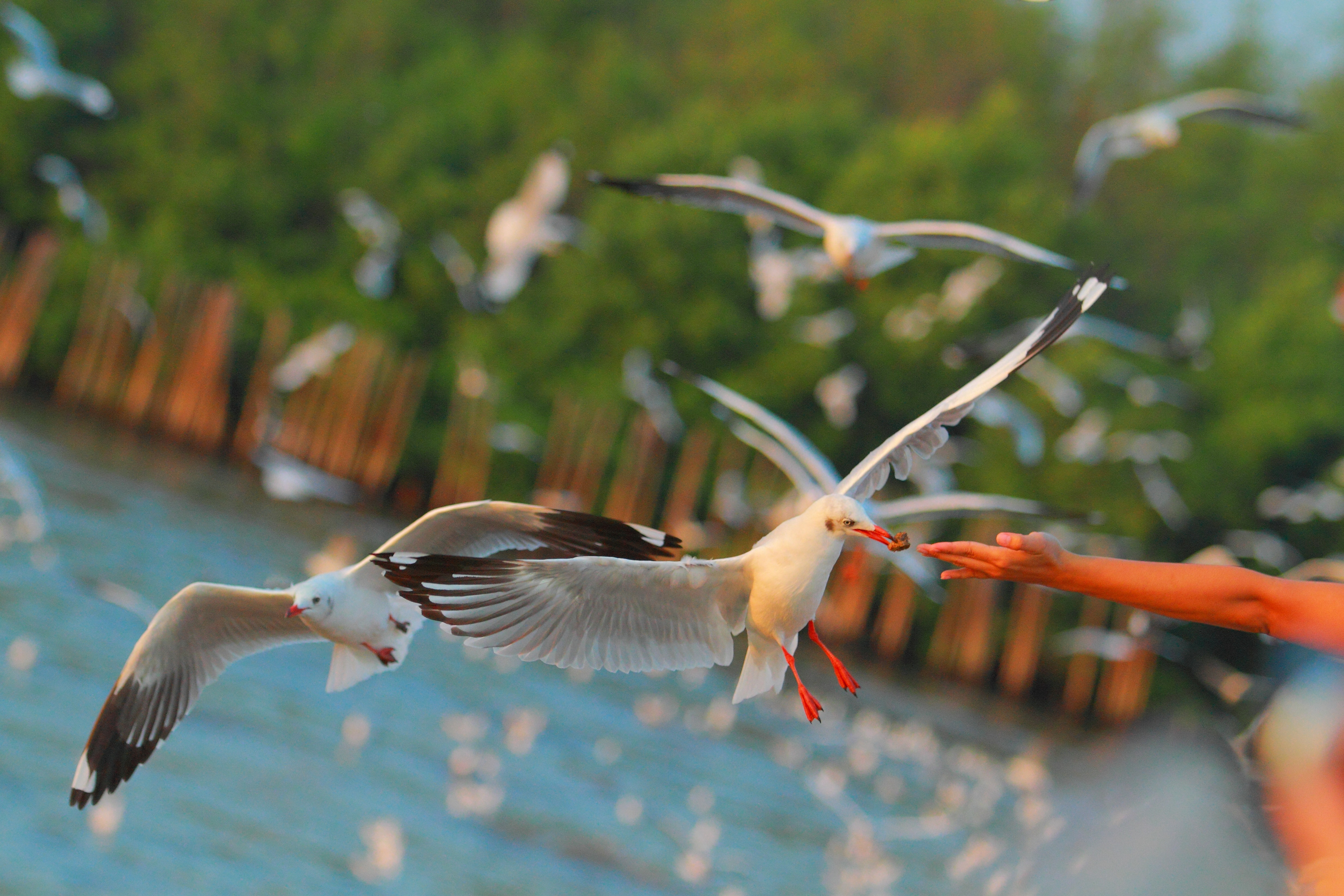 57644 download wallpaper Animals, Sea, Hand, Birds, Seagulls screensavers and pictures for free