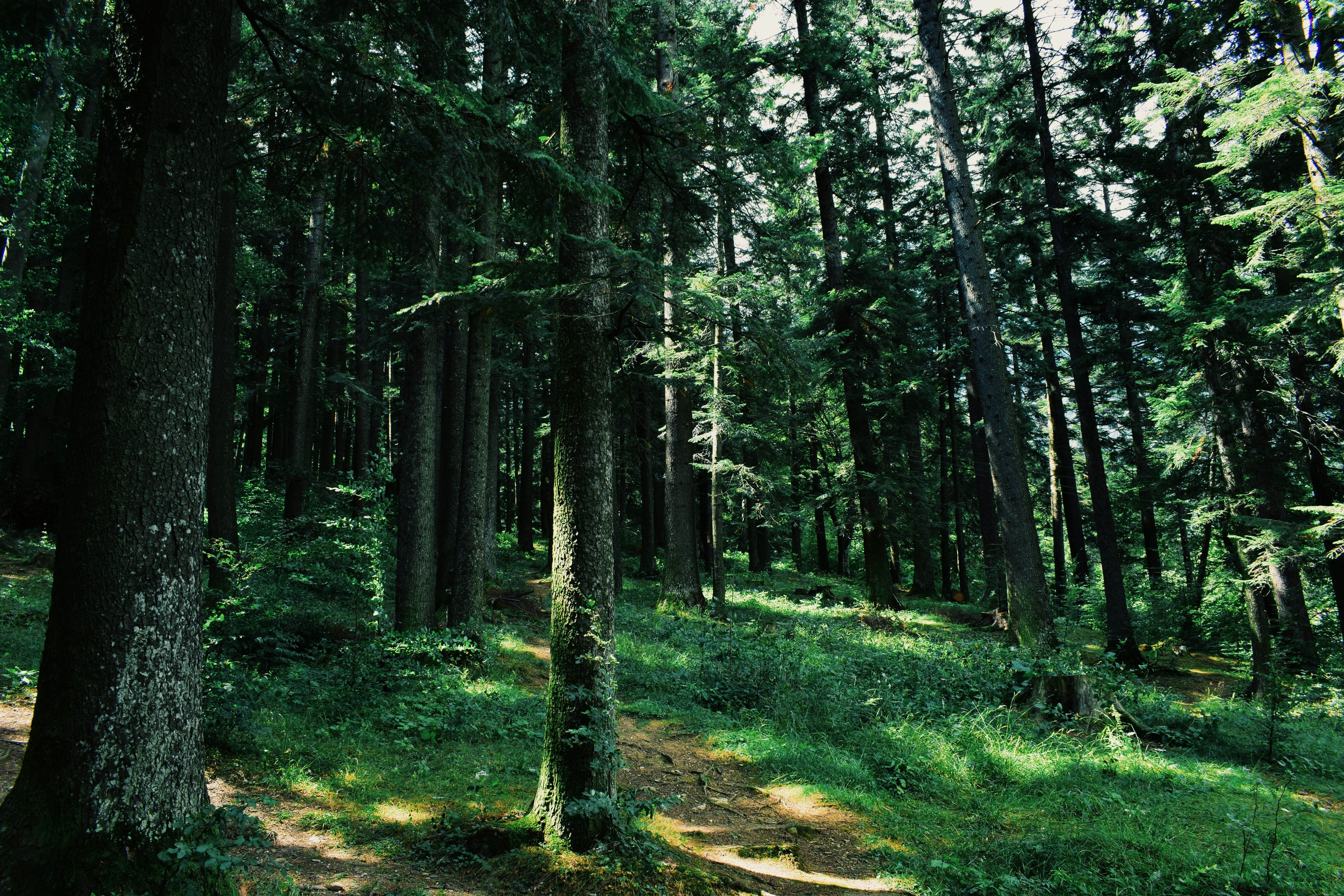 144500 Screensavers and Wallpapers Path for phone. Download Nature, Trees, Grass, Forest, Path pictures for free