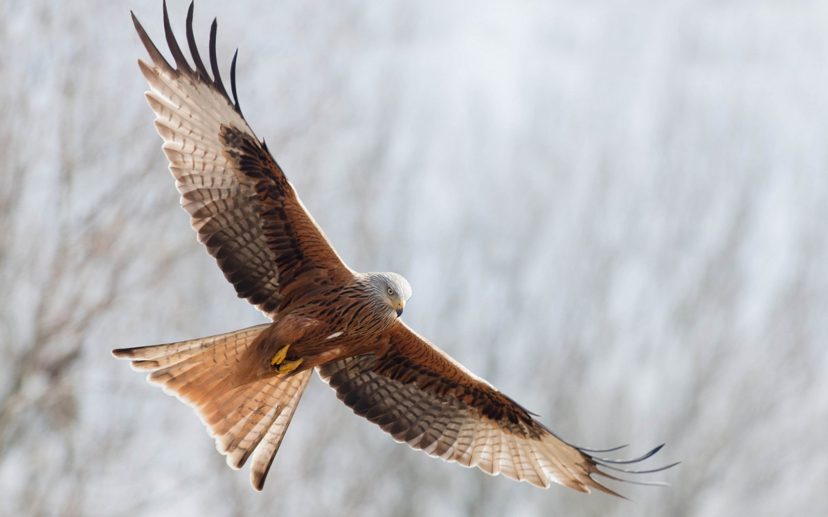 44190 download wallpaper Animals, Birds, Eagles screensavers and pictures for free