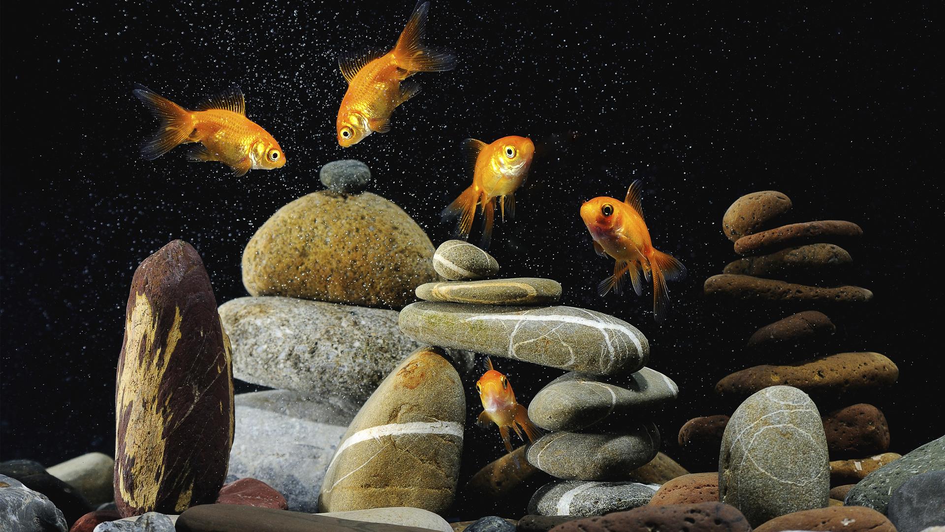 30288 Hintergrundbild herunterladen Tiere, Fotokunst, Fische - Bildschirmschoner und Bilder kostenlos
