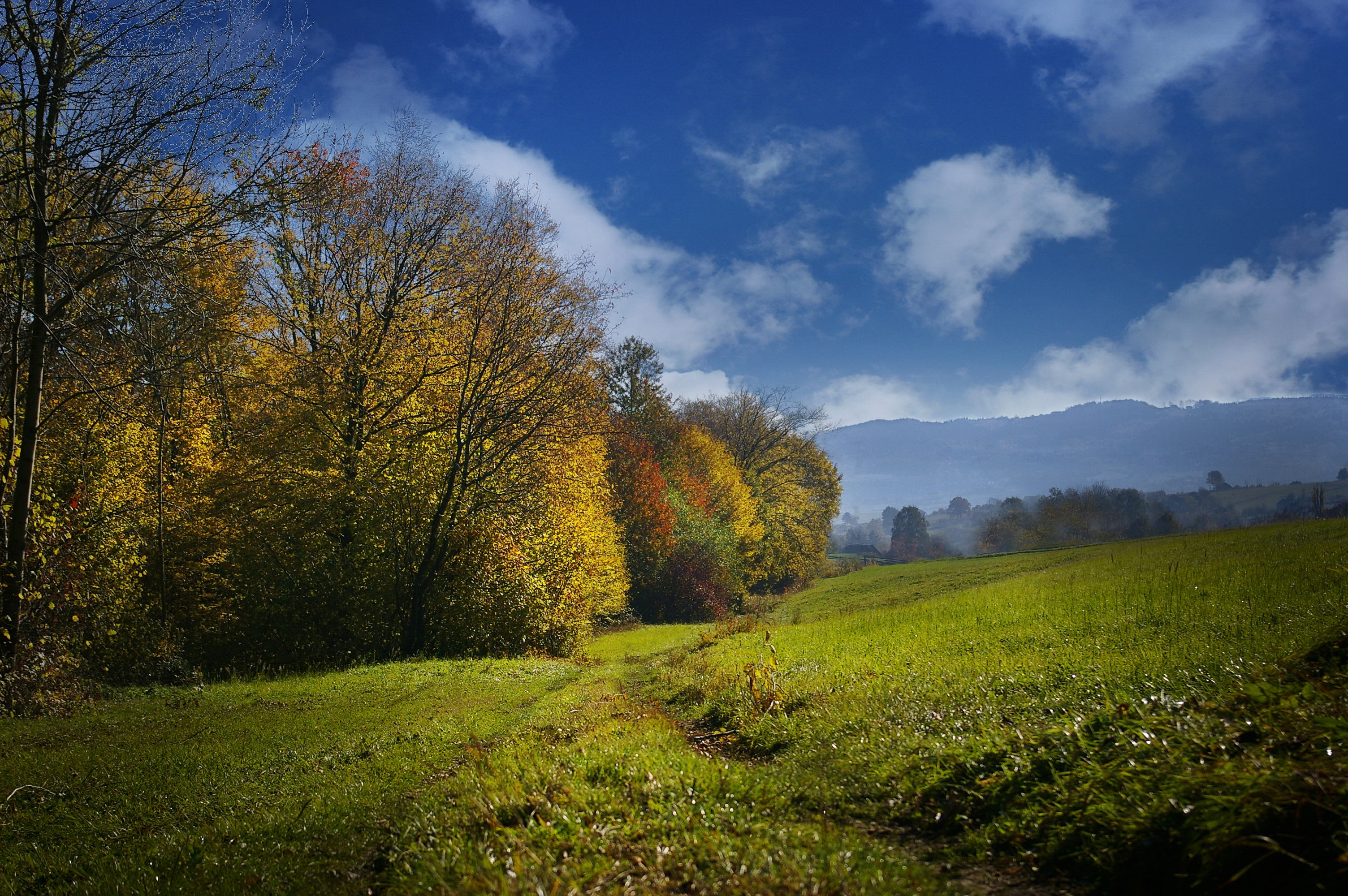 80249 Screensavers and Wallpapers Field for phone. Download Autumn, Nature, Trees, Grass, Sky, Field pictures for free