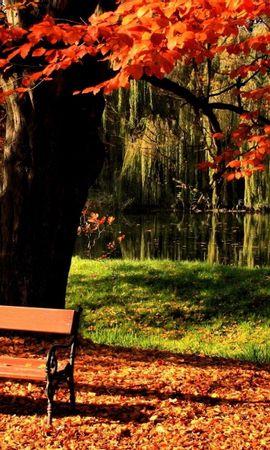 23753 скачать обои Пейзаж, Деревья, Осень, Листья - заставки и картинки бесплатно