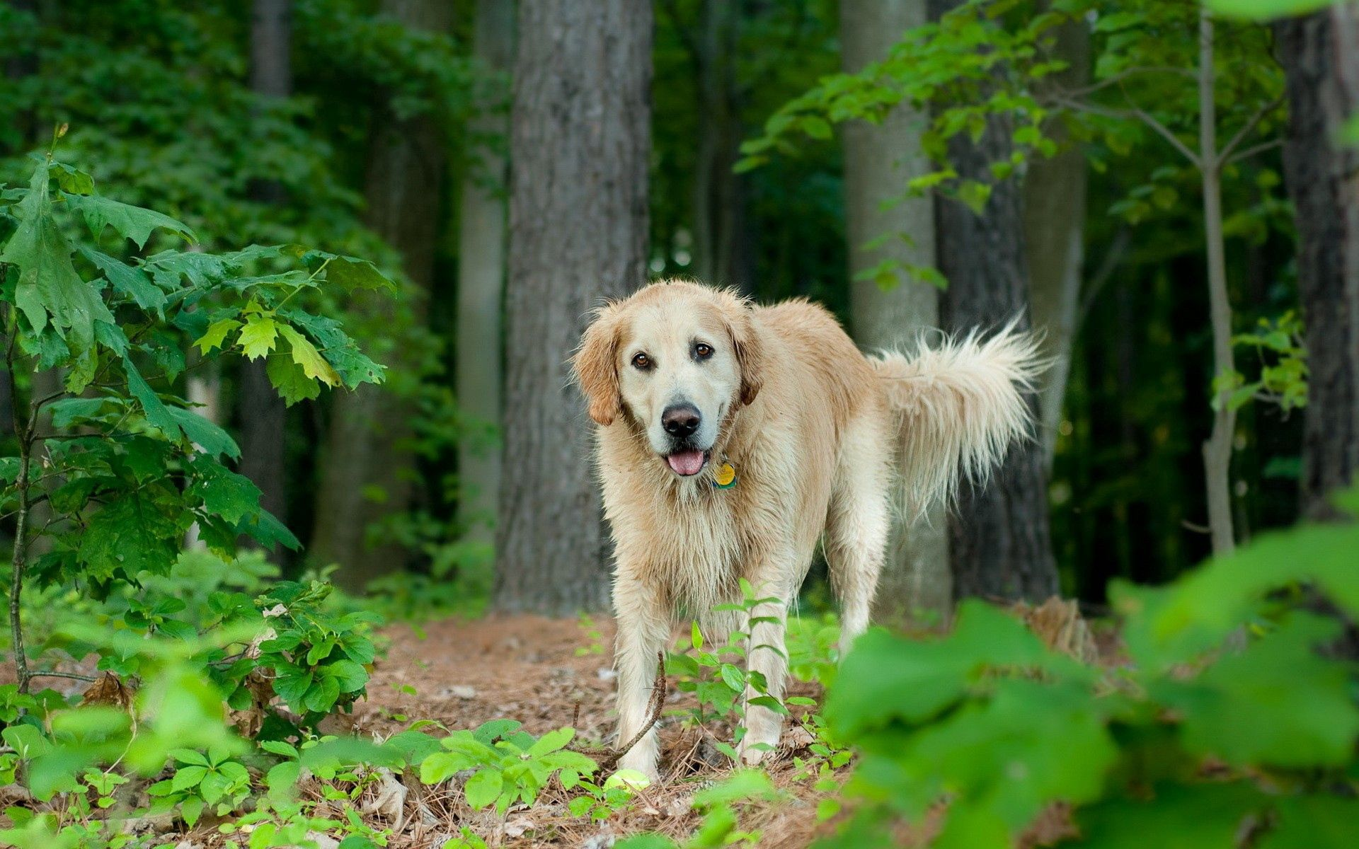 77269 download wallpaper Animals, Dog, Grass, Trees, Leaves, Stroll screensavers and pictures for free