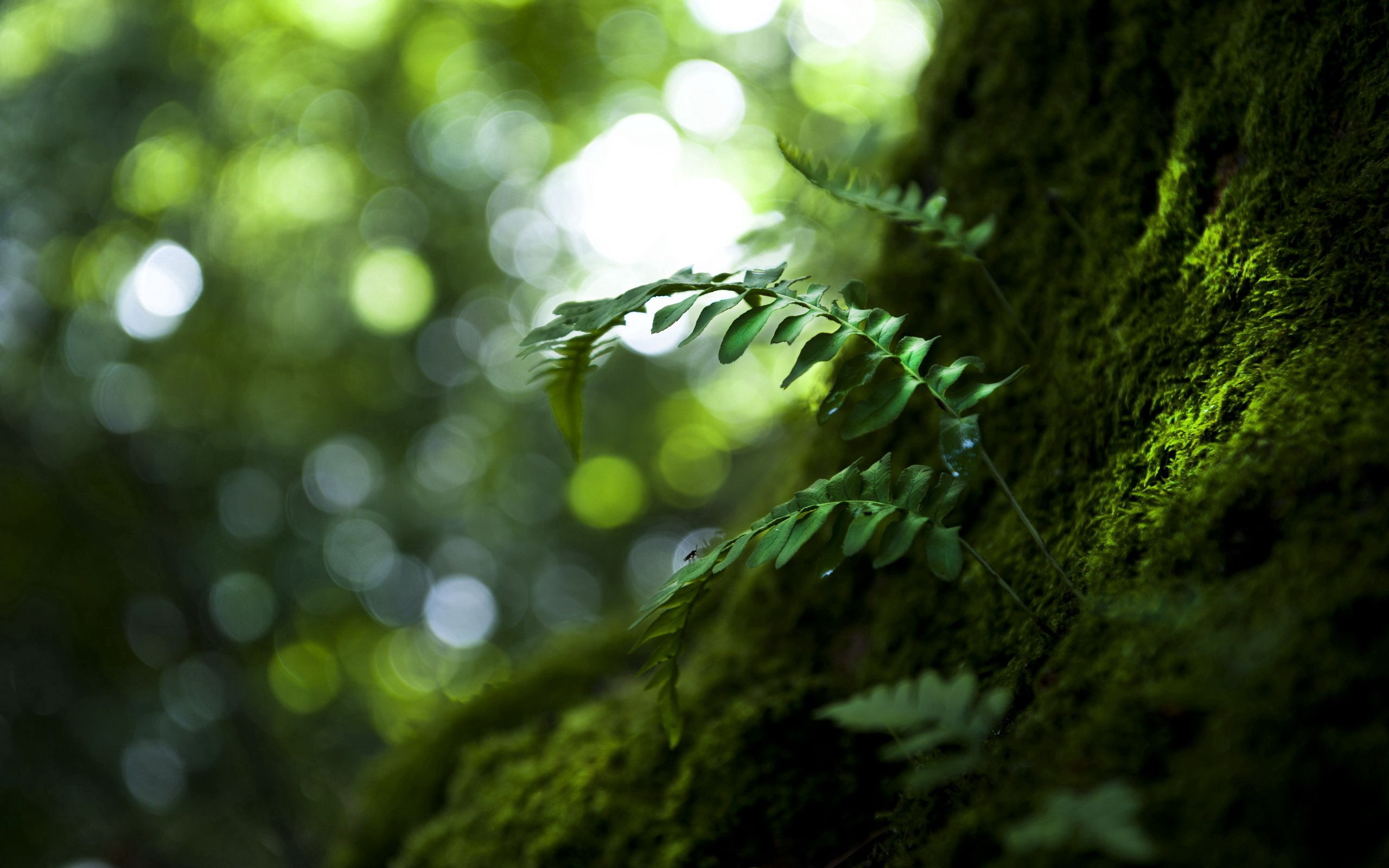 114185 download wallpaper Leaves, Nature, Macro, Wood, Tree screensavers and pictures for free