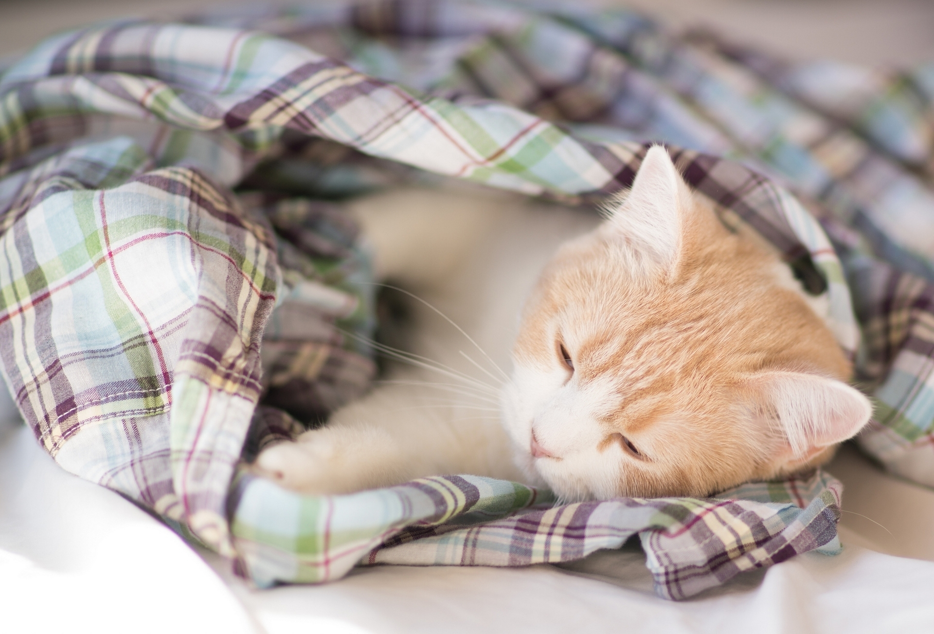 99720 download wallpaper Animals, Kitty, Kitten, Blanket, Sleep, Dream, Nice, Sweetheart screensavers and pictures for free