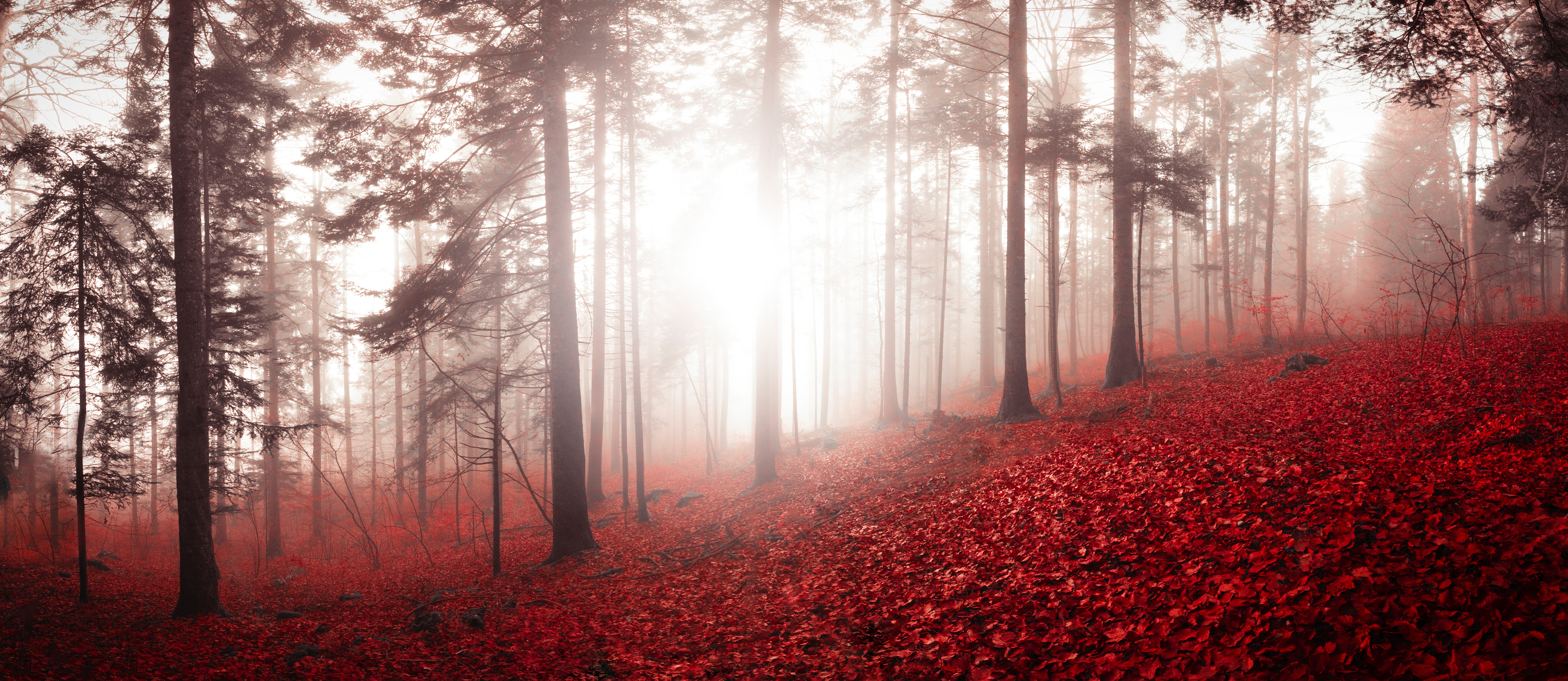 66544 download wallpaper Nature, Trees, Autumn, Forest, Fog, Foliage, Switzerland screensavers and pictures for free
