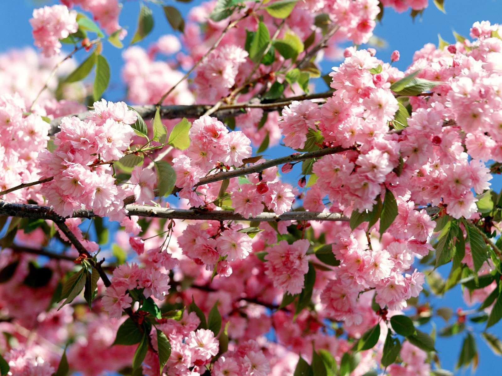 7926 download wallpaper Plants, Flowers, Trees screensavers and pictures for free