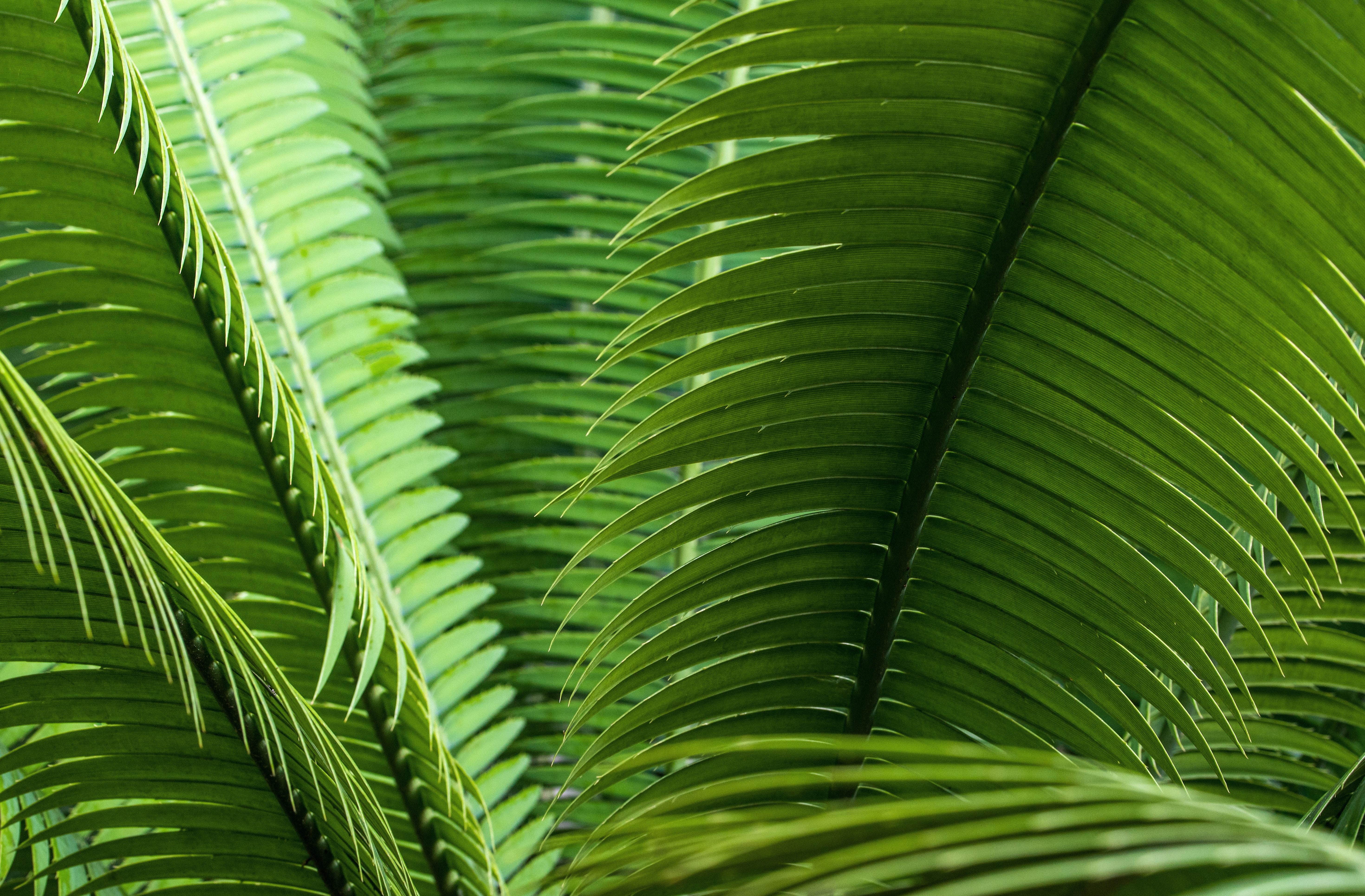 101592 скачать обои Макро, Листья, Растение, Зеленый, Крупным Планом - заставки и картинки бесплатно