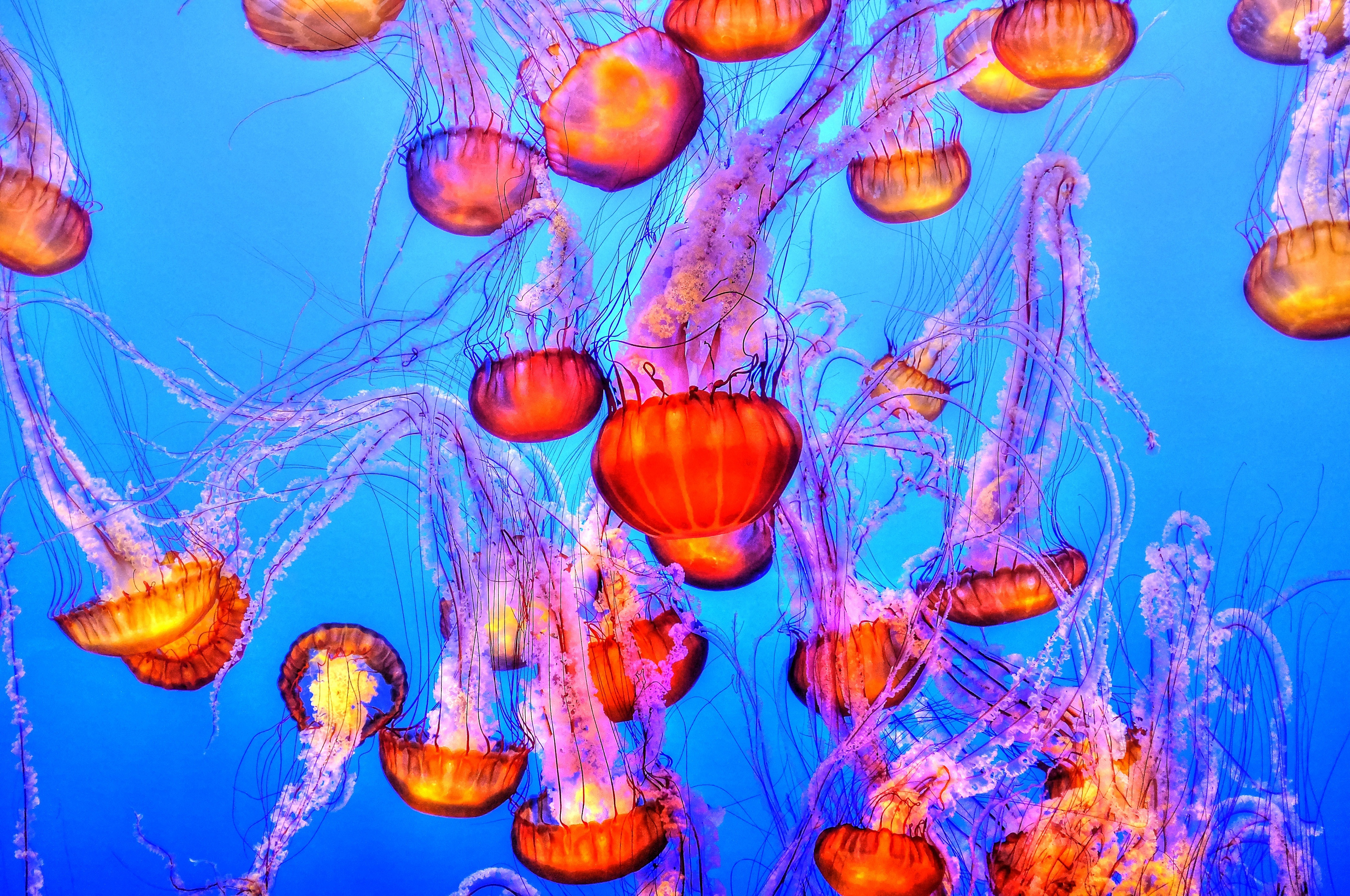 128196 download wallpaper Animals, Jellyfish, Underwater World, Swimming screensavers and pictures for free