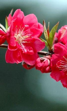 41051 télécharger le fond d'écran Plantes, Fleurs - économiseurs d'écran et images gratuitement