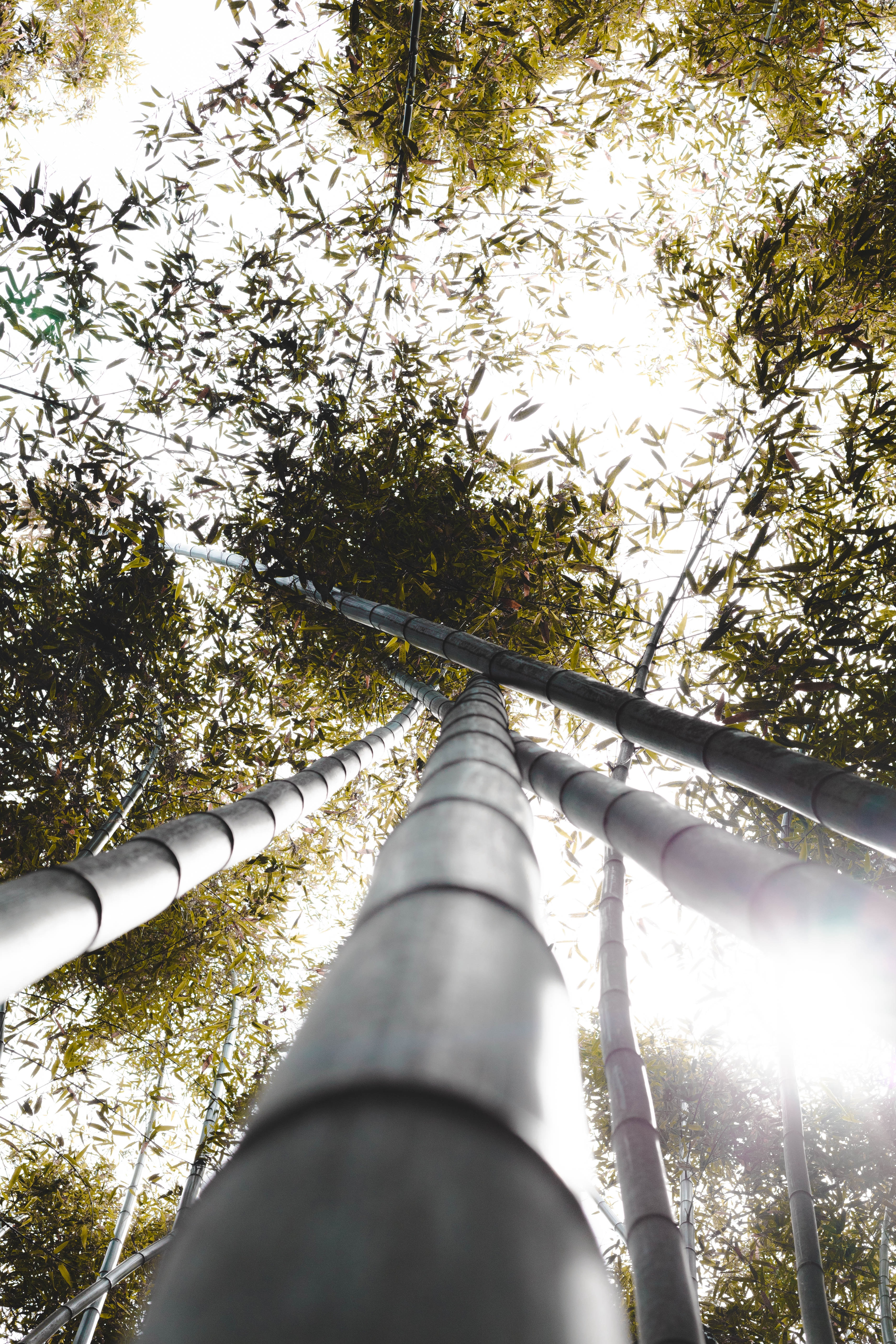 104800 download wallpaper Nature, Bamboo, Trunks, Plants, Leaves, Sunlight screensavers and pictures for free
