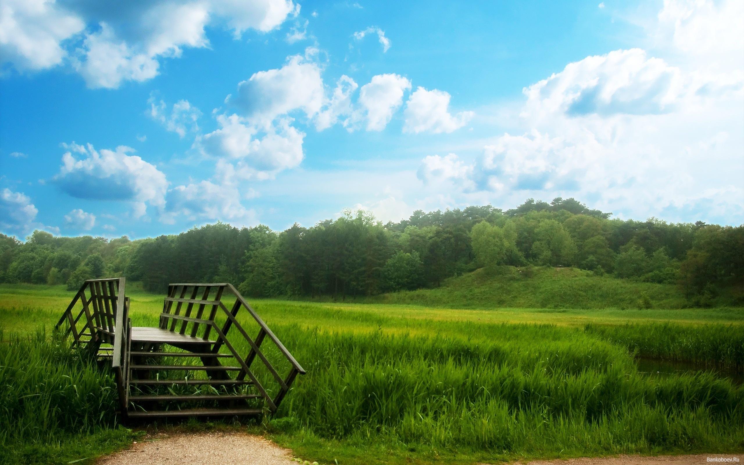 12185 скачать обои Растения, Пейзаж, Трава, Небо - заставки и картинки бесплатно