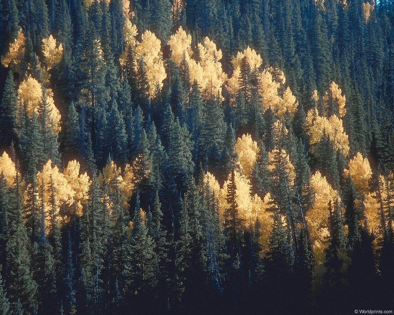 7947 Hintergrundbild herunterladen Tannenbaum, Pflanzen, Landschaft, Natur, Bäume - Bildschirmschoner und Bilder kostenlos