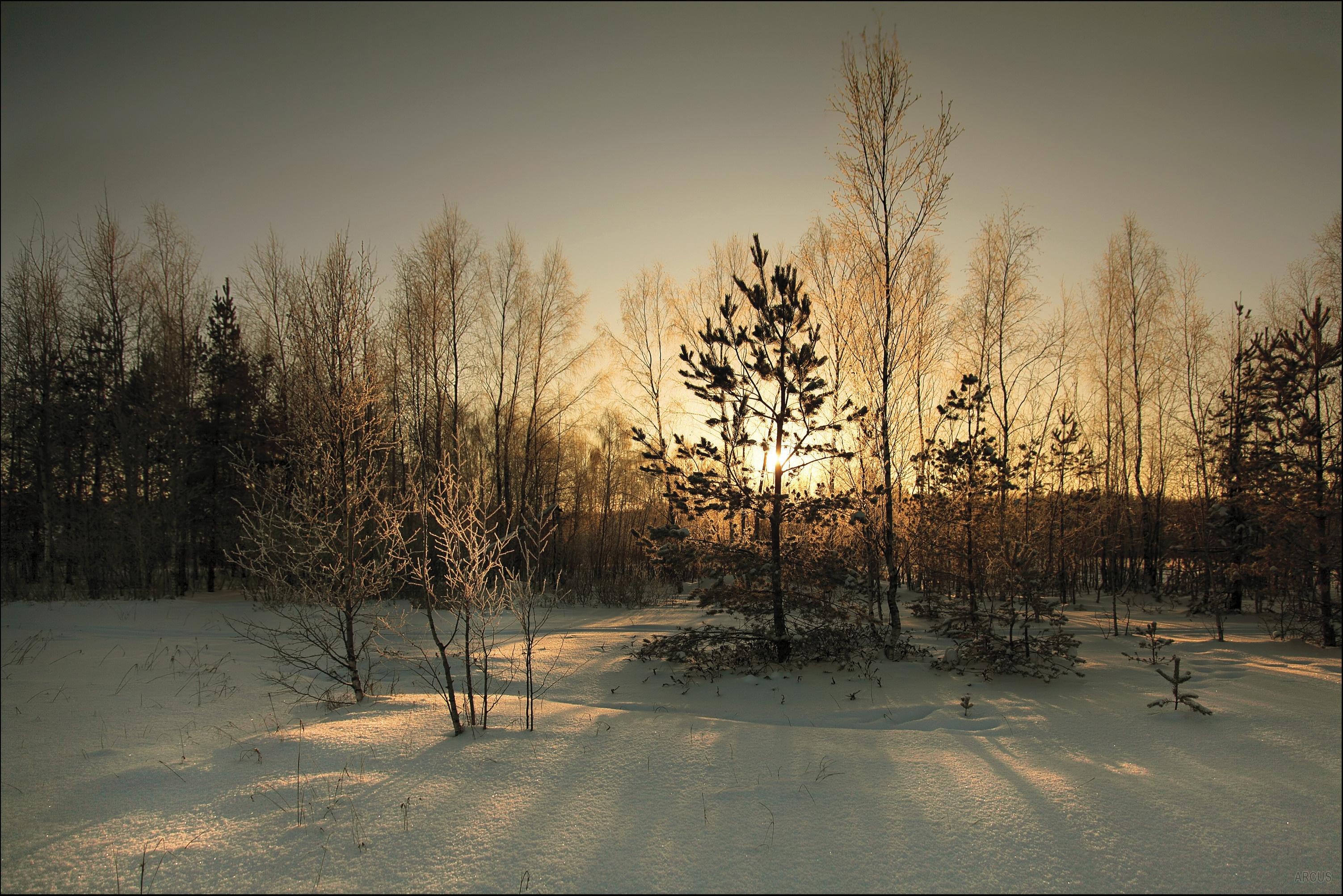 121963 Hintergrundbild herunterladen Winterreifen, Natur, Sun, Wald, Startseite, Cover - Bildschirmschoner und Bilder kostenlos