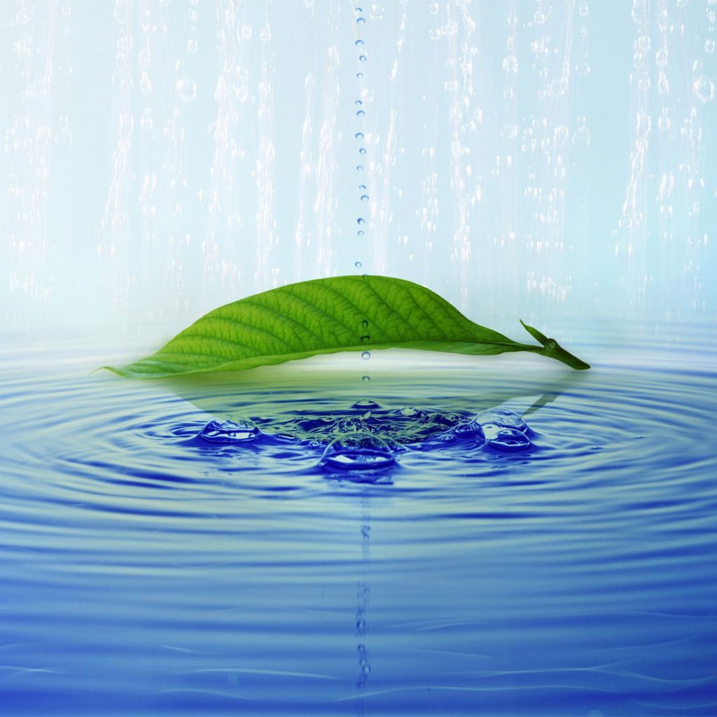 19394 download wallpaper Water, Background, Leaves, Drops screensavers and pictures for free