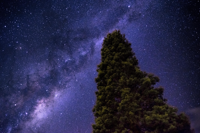 118770壁紙のダウンロード自然, 星空, 天の川, 木材, 木, スター-スクリーンセーバーと写真を無料で
