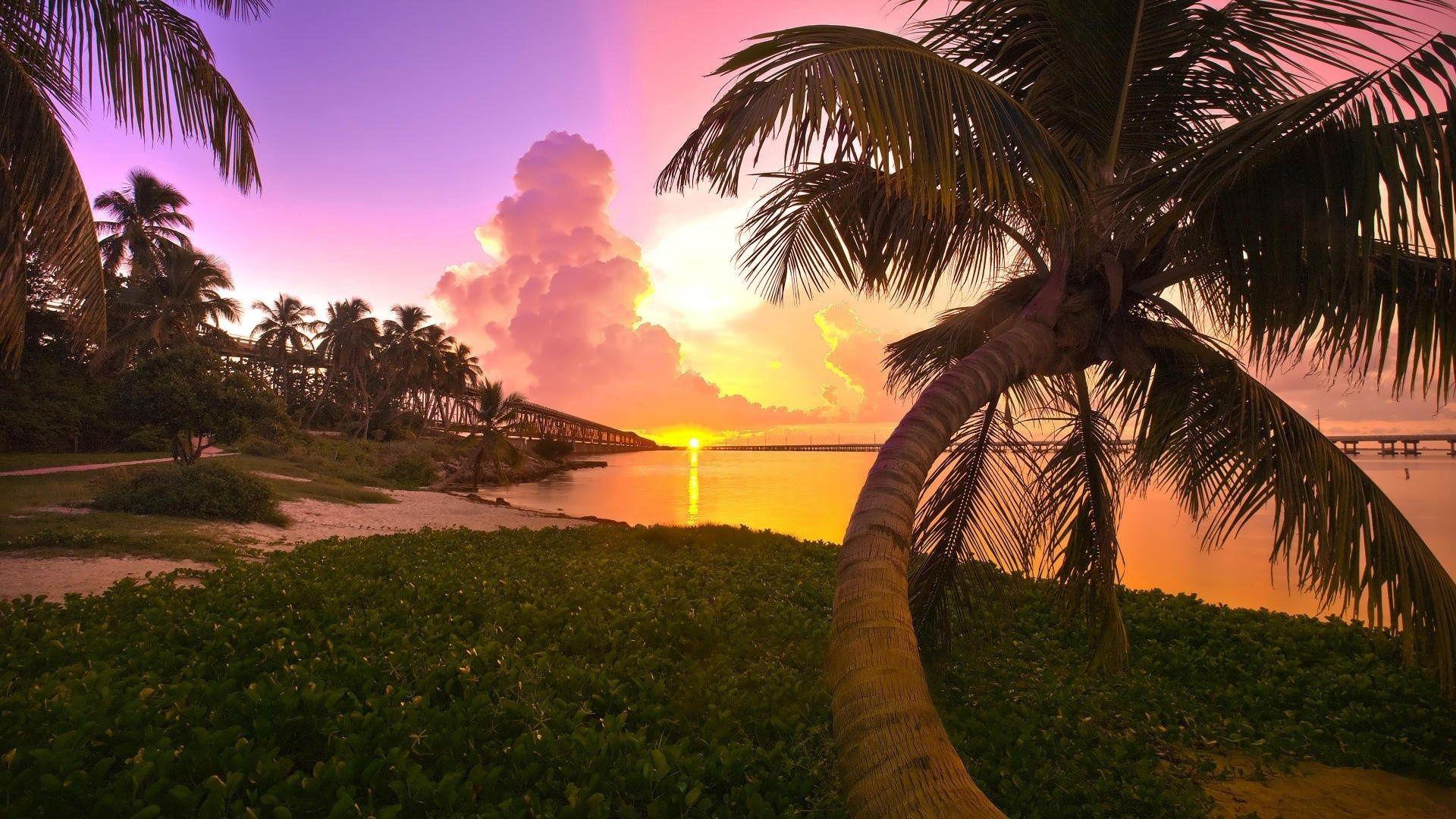 53558 免費下載壁紙 性质, 棕榈, 帕尔马, 支撑, 海岸, 日落, 桥, 晚上 屏保和圖片