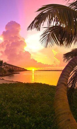 53558 скачать обои Природа, Пальма, Берег, Закат, Мост, Вечер - заставки и картинки бесплатно
