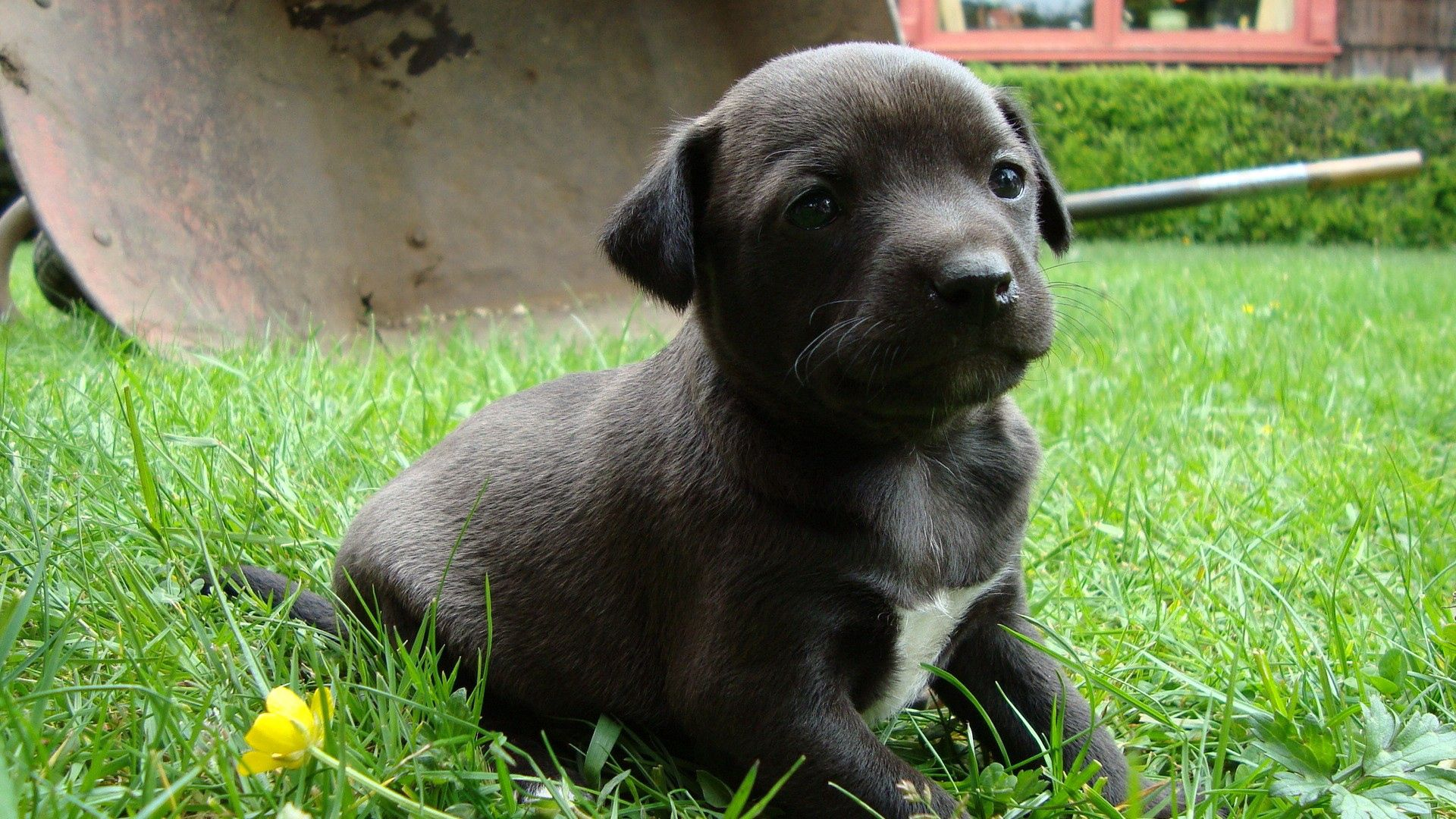 104645 download wallpaper Animals, Puppy, Grass, Sit, Dog screensavers and pictures for free