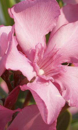 43230 télécharger le fond d'écran Plantes, Fleurs - économiseurs d'écran et images gratuitement