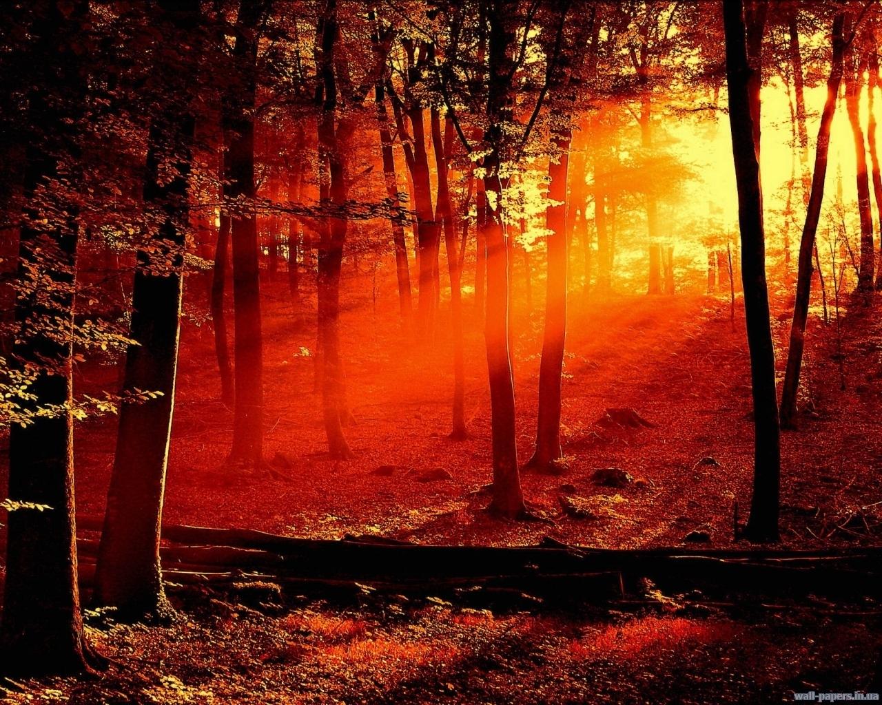 4846 скачать обои Пейзаж, Деревья, Закат - заставки и картинки бесплатно