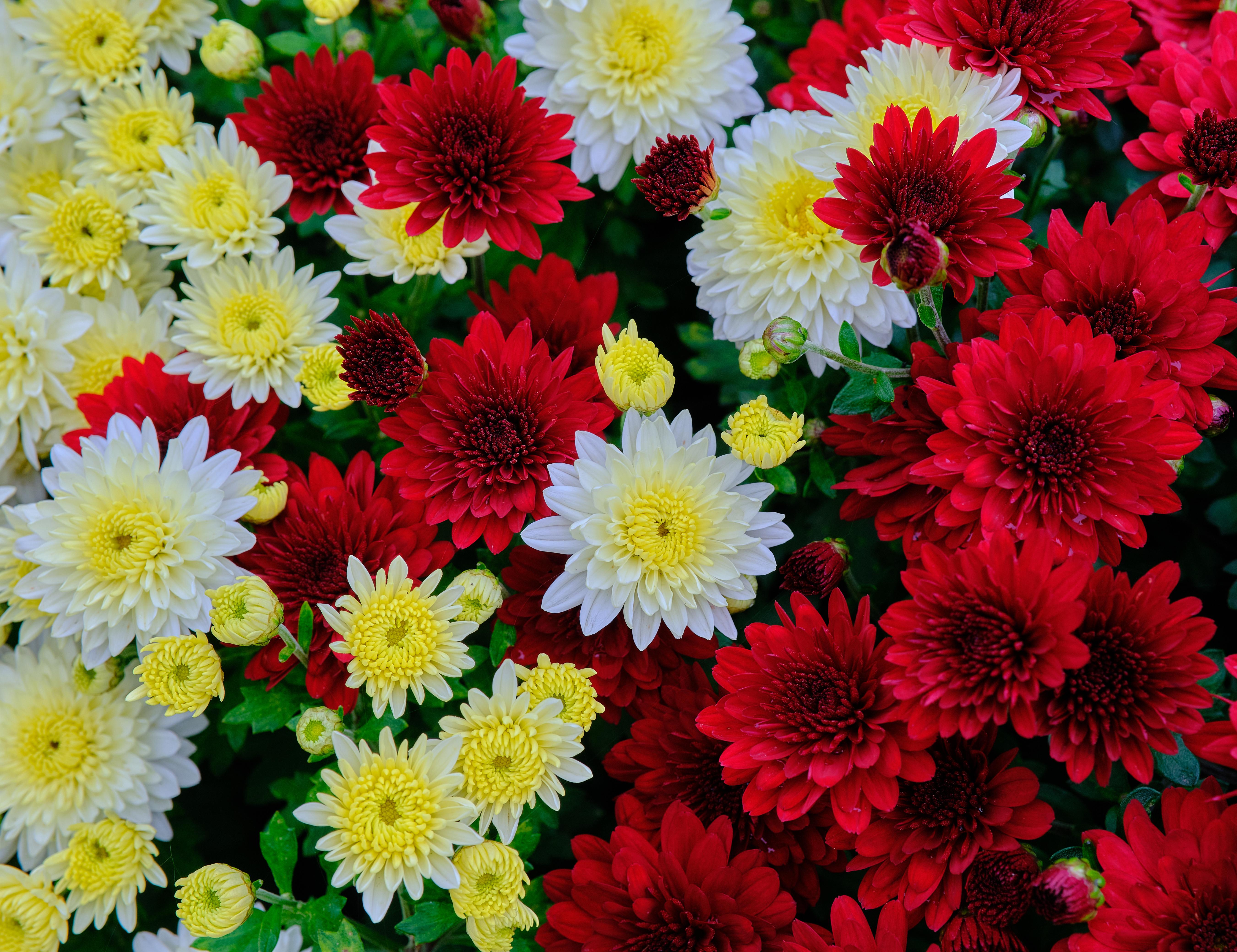 Скачать обои Цветы на телефон бесплатно