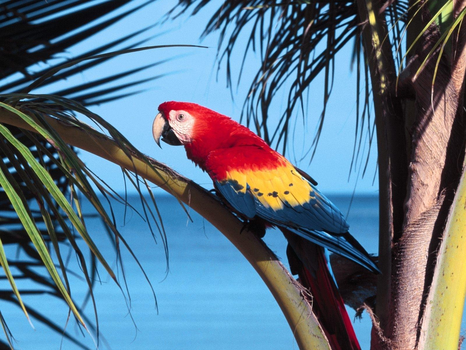 7360 Заставки и Обои Попугаи на телефон. Скачать Попугаи, Животные, Птицы картинки бесплатно