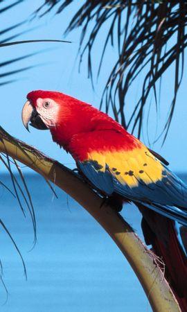 7360 baixar papel de parede Animais, Aves, Papagaios - protetores de tela e imagens gratuitamente